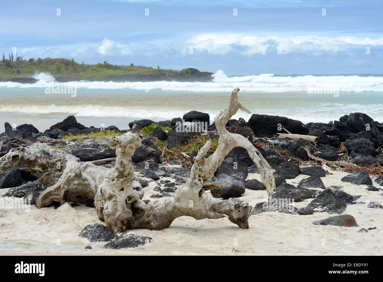 Tortuga Bay, Santa Cruz, Galapagos, Ecuador - Stock Image