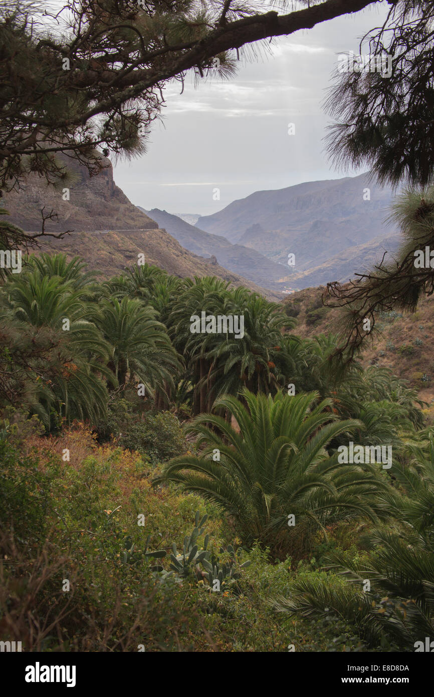 Vally La Gomera, Canary Islands. - Stock Image
