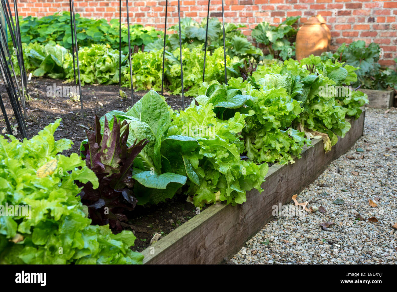 The kitchen garden at the rear of the 18th century Georgian Deanery, Oakfield Demesne, Raphoe, County Donegal, Ireland, - Stock Image