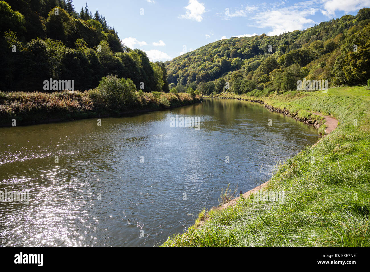Wooded stretch of the river Wye near Monmouth Wales - Stock Image