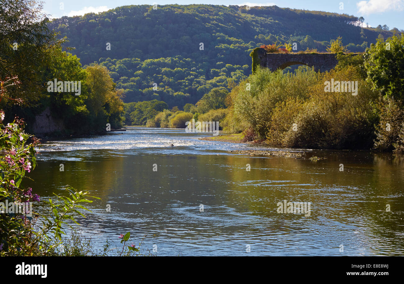 Ruined viaduct by the River Wye near Monmouth Wales - Stock Image