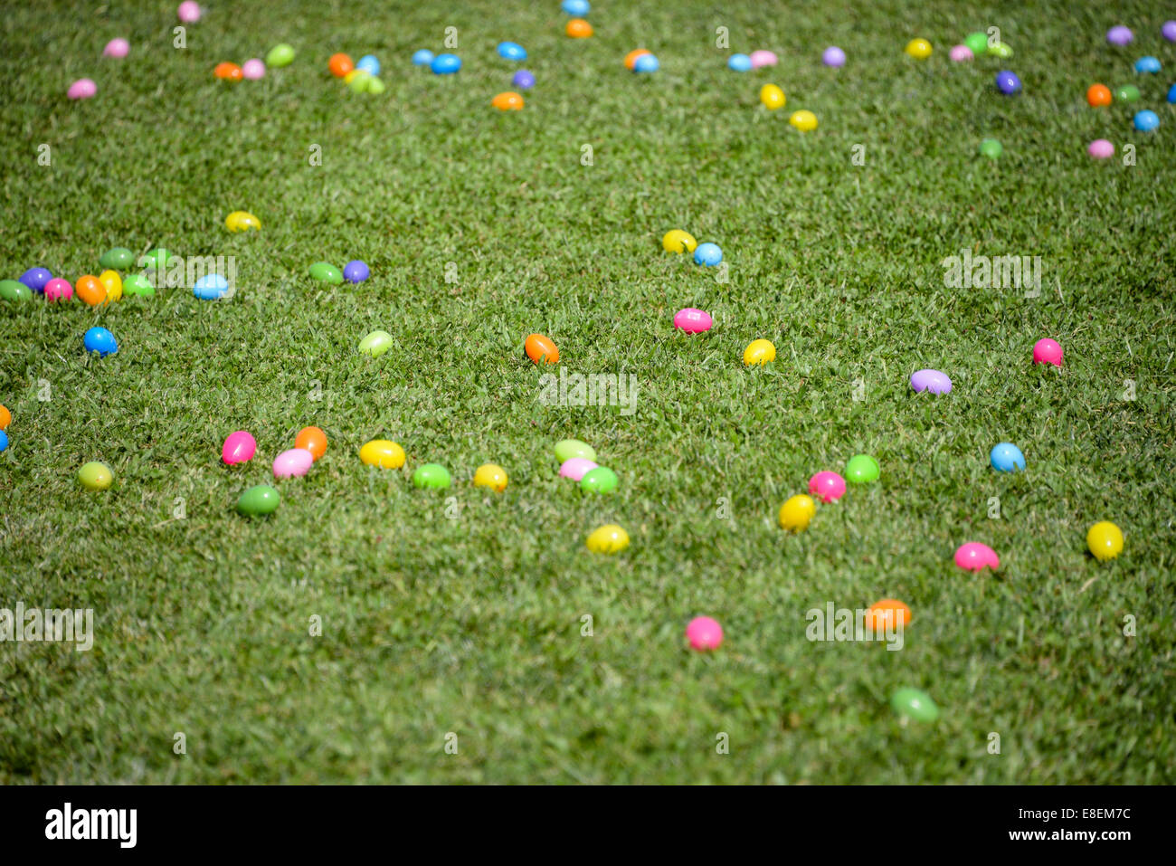 Colorful Plastic Easter Eggs In Green Grass Field Egg Hunt Rush Hunting Different Colors