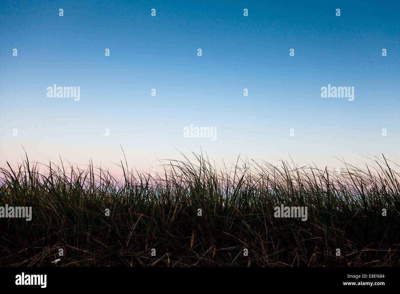 Long grass in silhouette with room for text - Stock Image