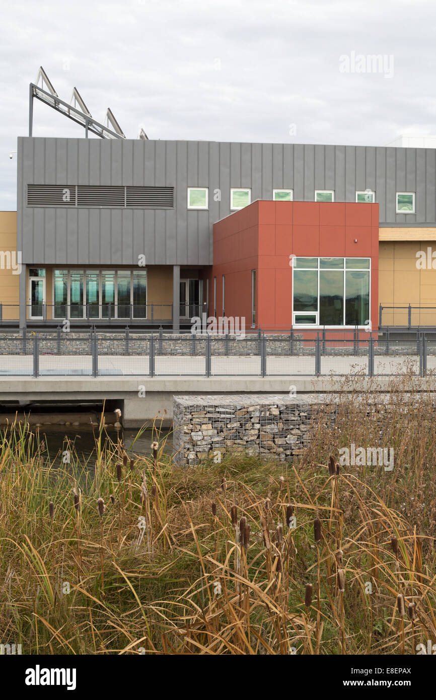 Environmental Education and Ethics Centre with water treatment wetland including Cattails (Typha latifolia) in Ralph Stock Photo