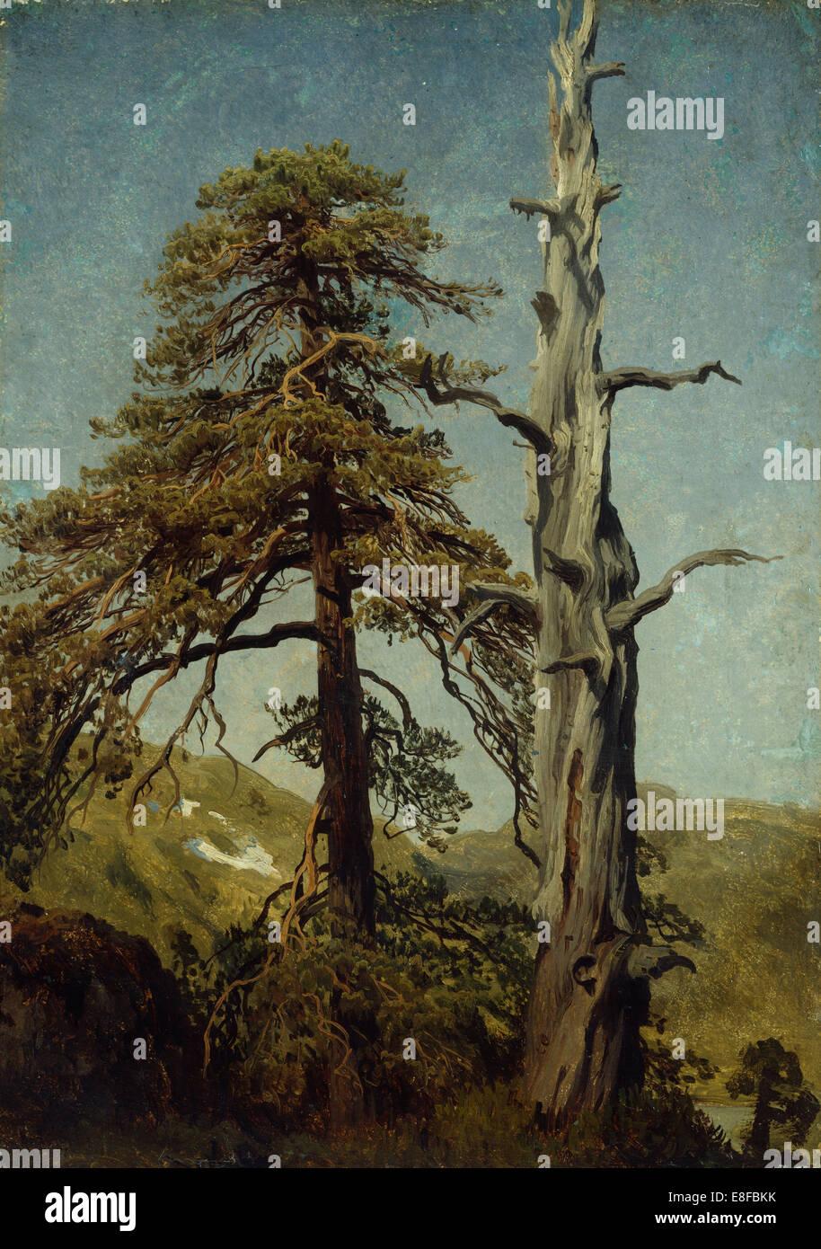 Study of Trees. Artist: Cappelen, August (1827-1852) - Stock Image