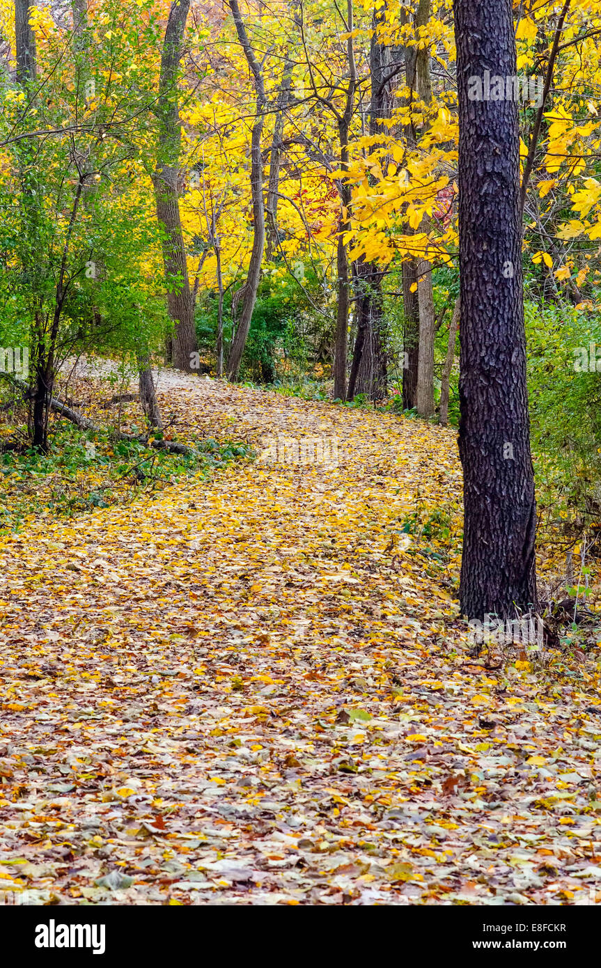 USA, Illinois, DuPage County, Oak Brook, Woodland path in autumn - Stock Image