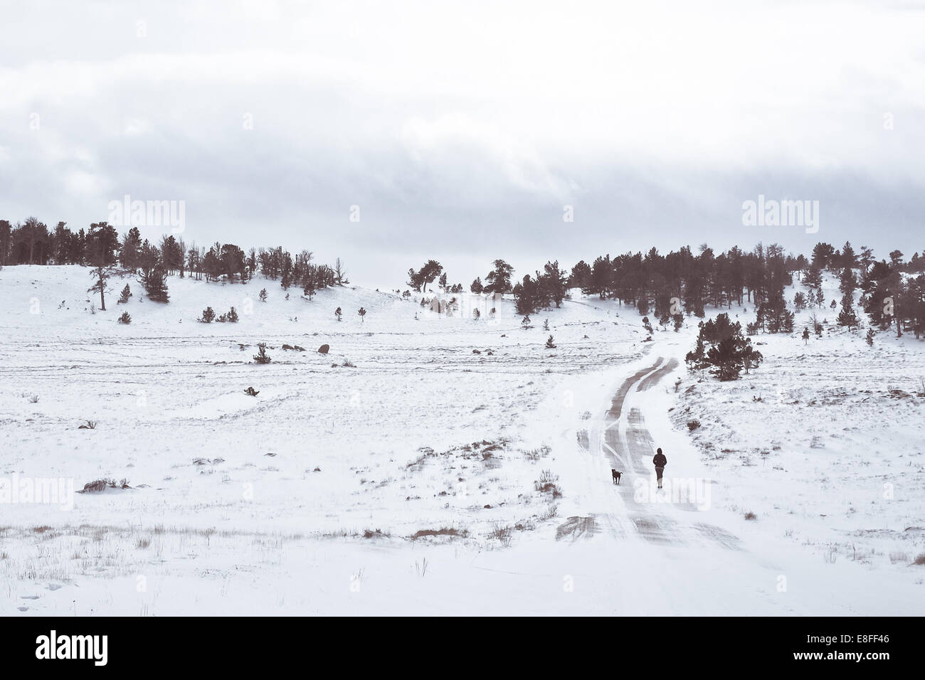 Woman walking down road with dog in winter, Illinois, America, USA - Stock Image