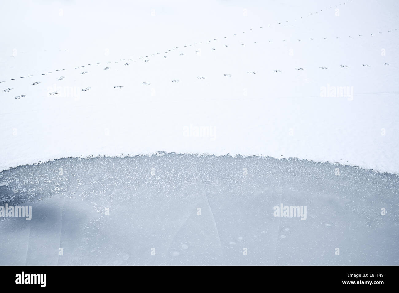 Animal tracks on frozen snow-covered lake, Colorado, America, USA - Stock Image