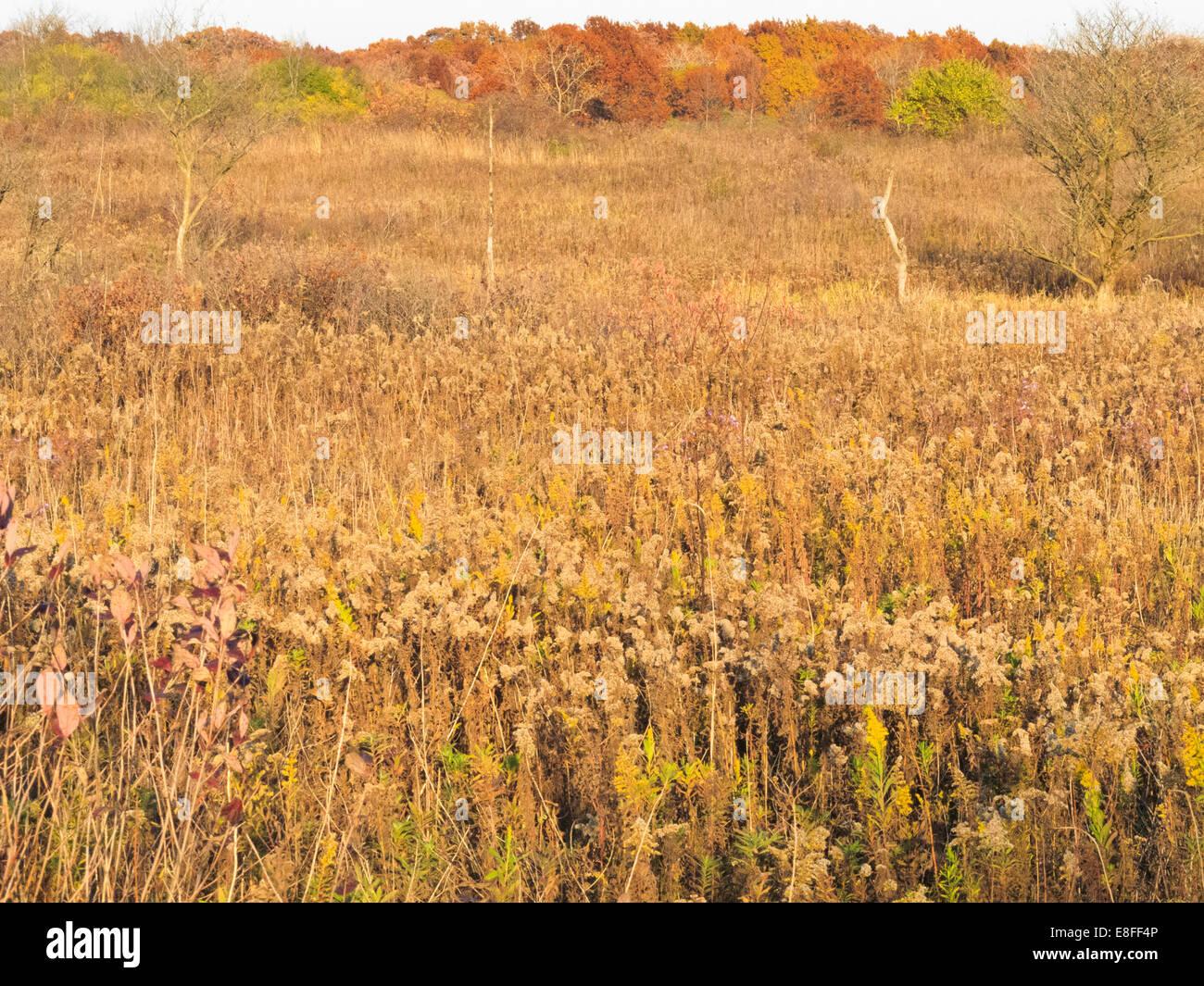 USA, Illinois, DuPage County, Darien, Prairie landscape in autumn - Stock Image
