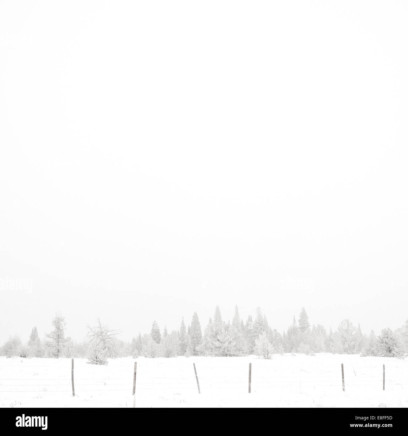 USA, Wyoming, Albany County, Laramie, Snow covered forest Stock Photo