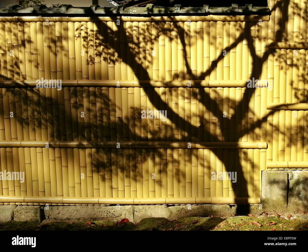 Shadow of tree on bamboo fence, Japan - Stock Image
