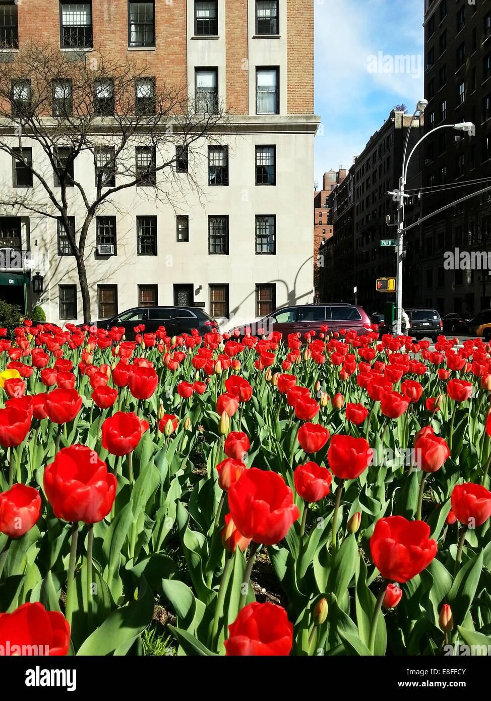 USA, New York State, New York City, Park Avenue in springtime - Stock Image