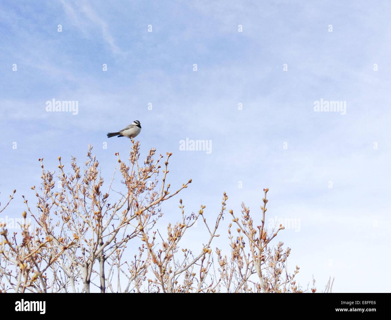 Bird on tree top - Stock Image