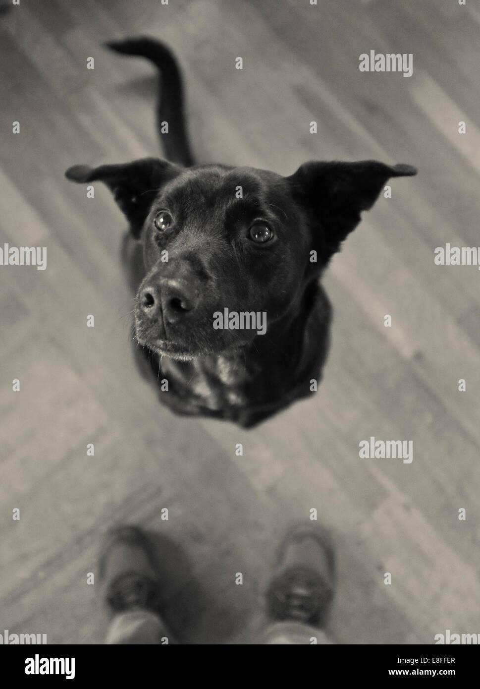Dog waiting - Stock Image