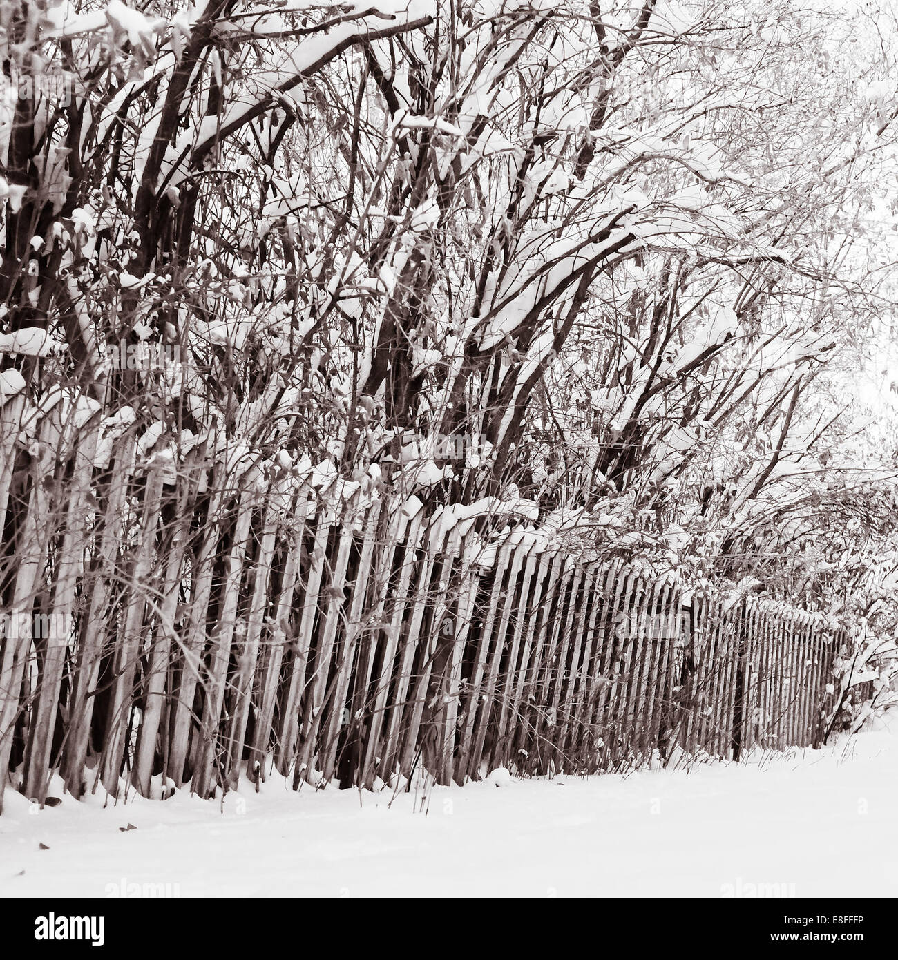 Wooden fence and trees covered with snow - Stock Image