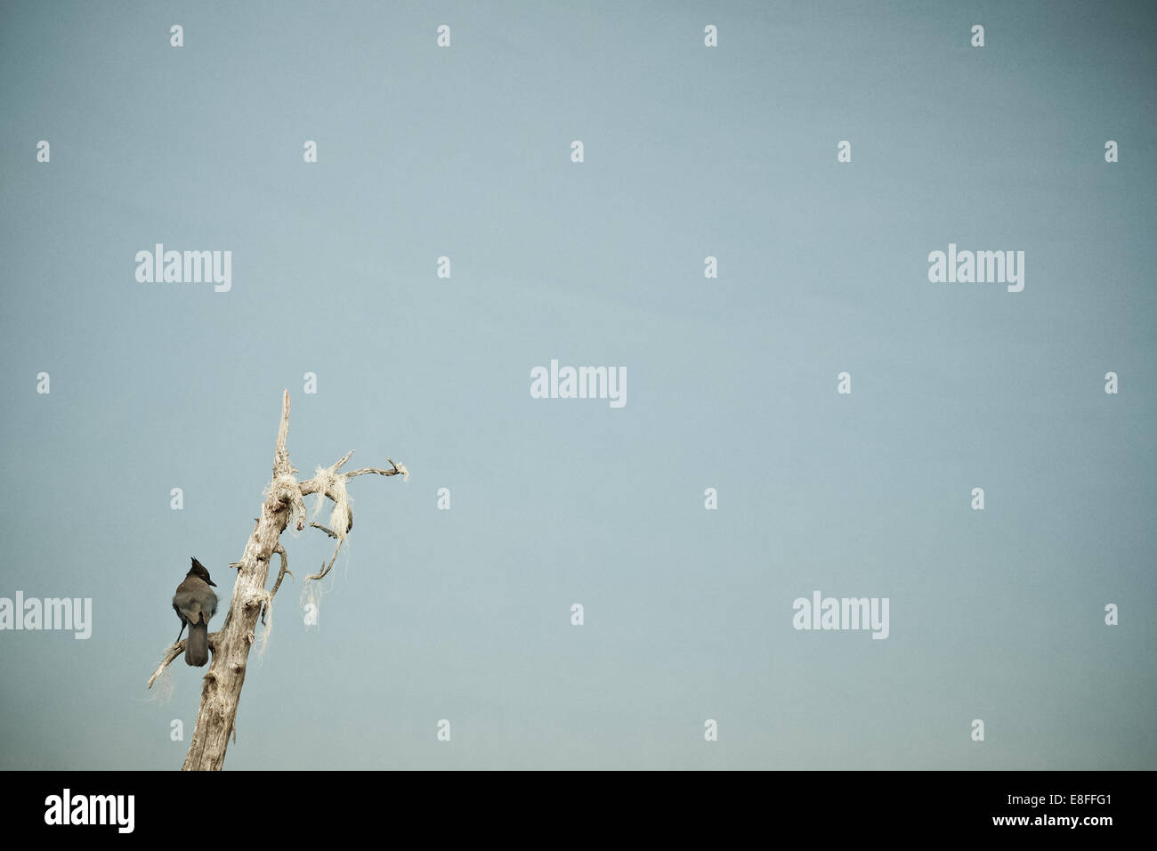 Bird on tree branch - Stock Image