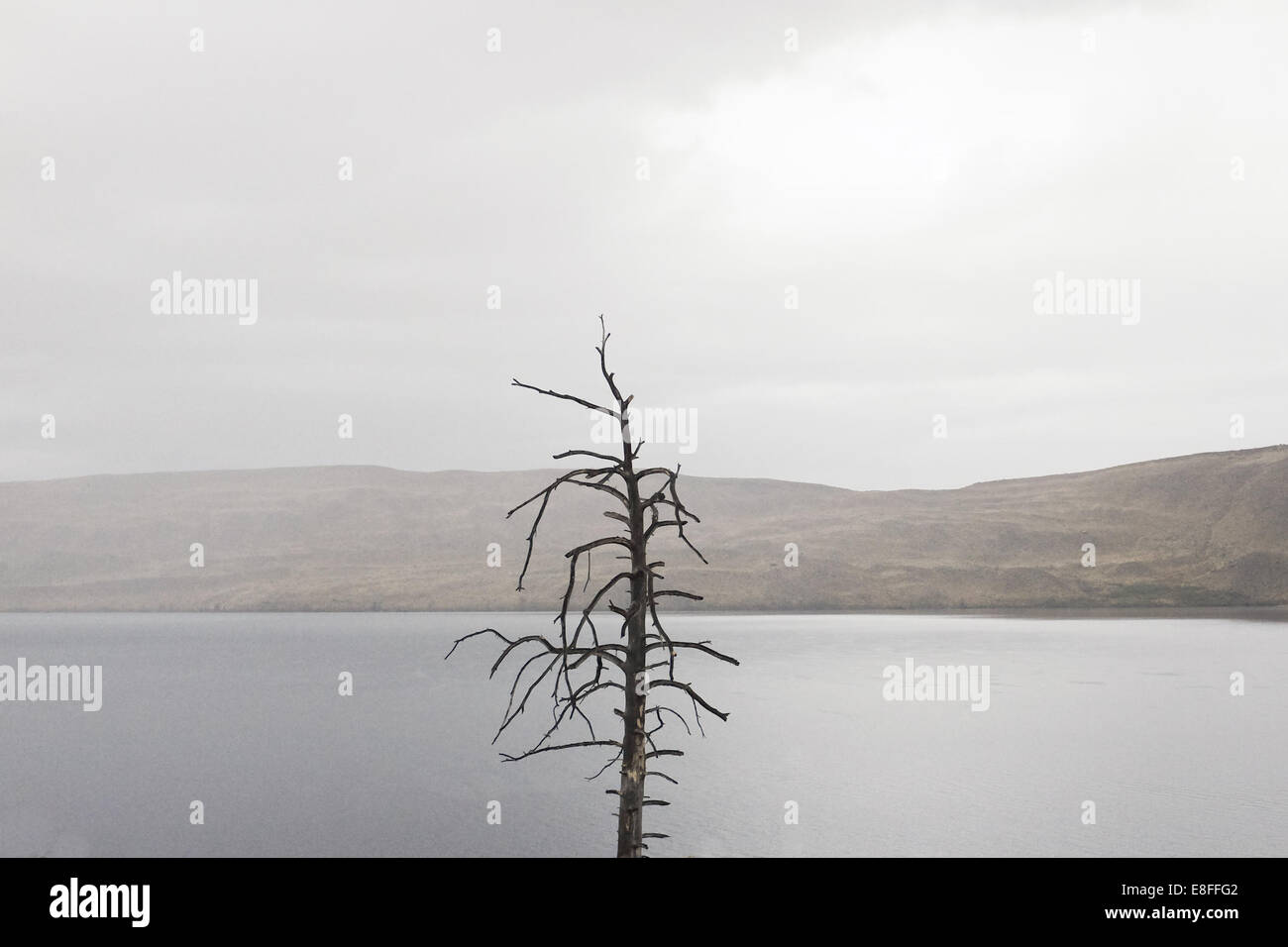 Bare tree by lake - Stock Image