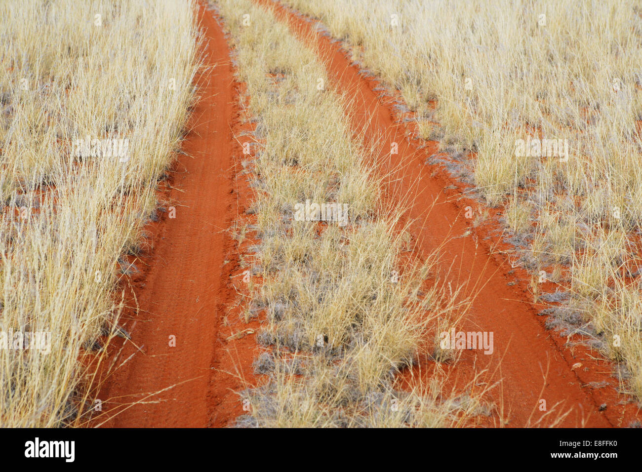 Tire tracks through orange sand in desert, Namibia - Stock Image