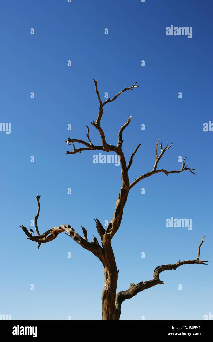 Tiny bird perching on dead tree, Namibia - Stock Image