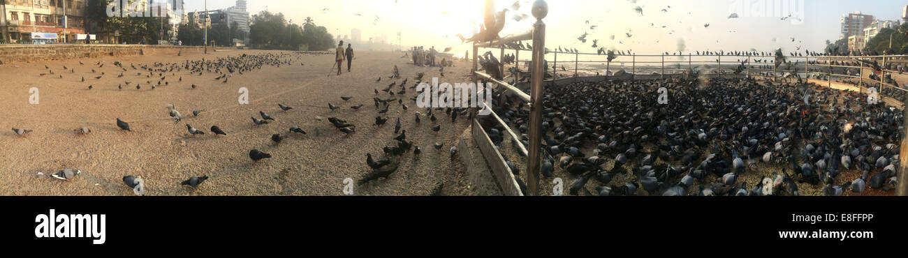 Charity bird feeding station on Marine Drive, Mumbai, India - Stock Image
