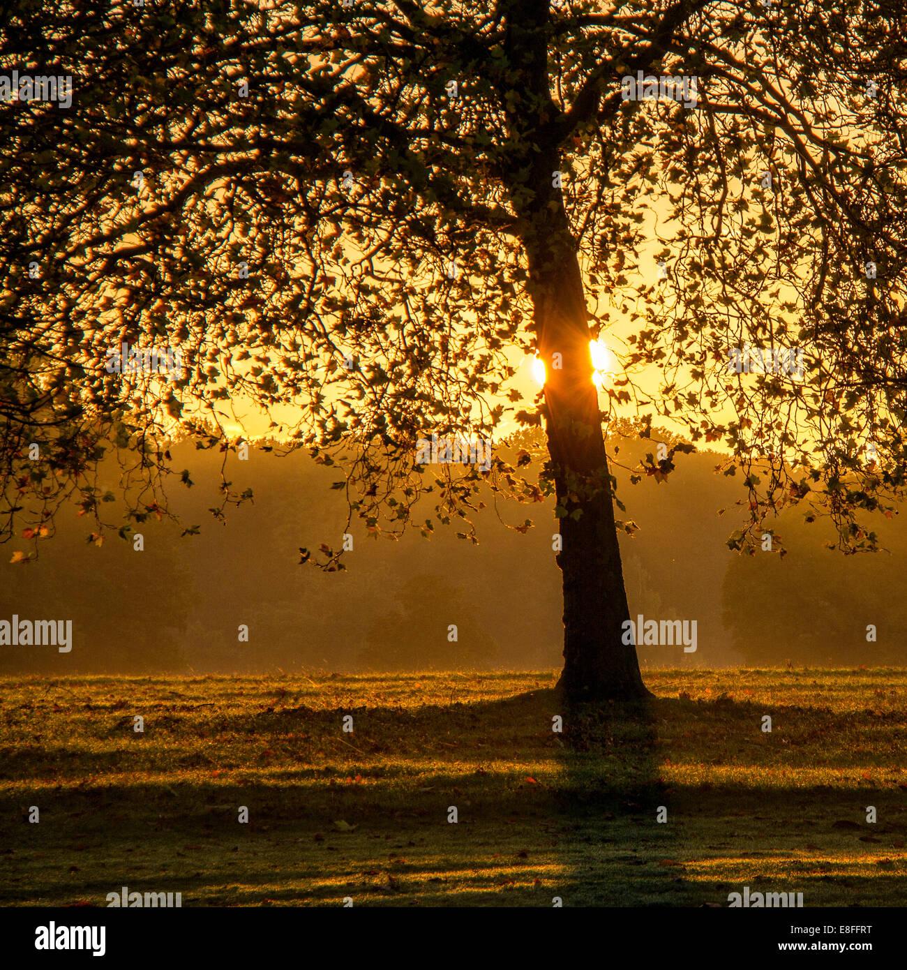 Backlit tree in park - Stock Image