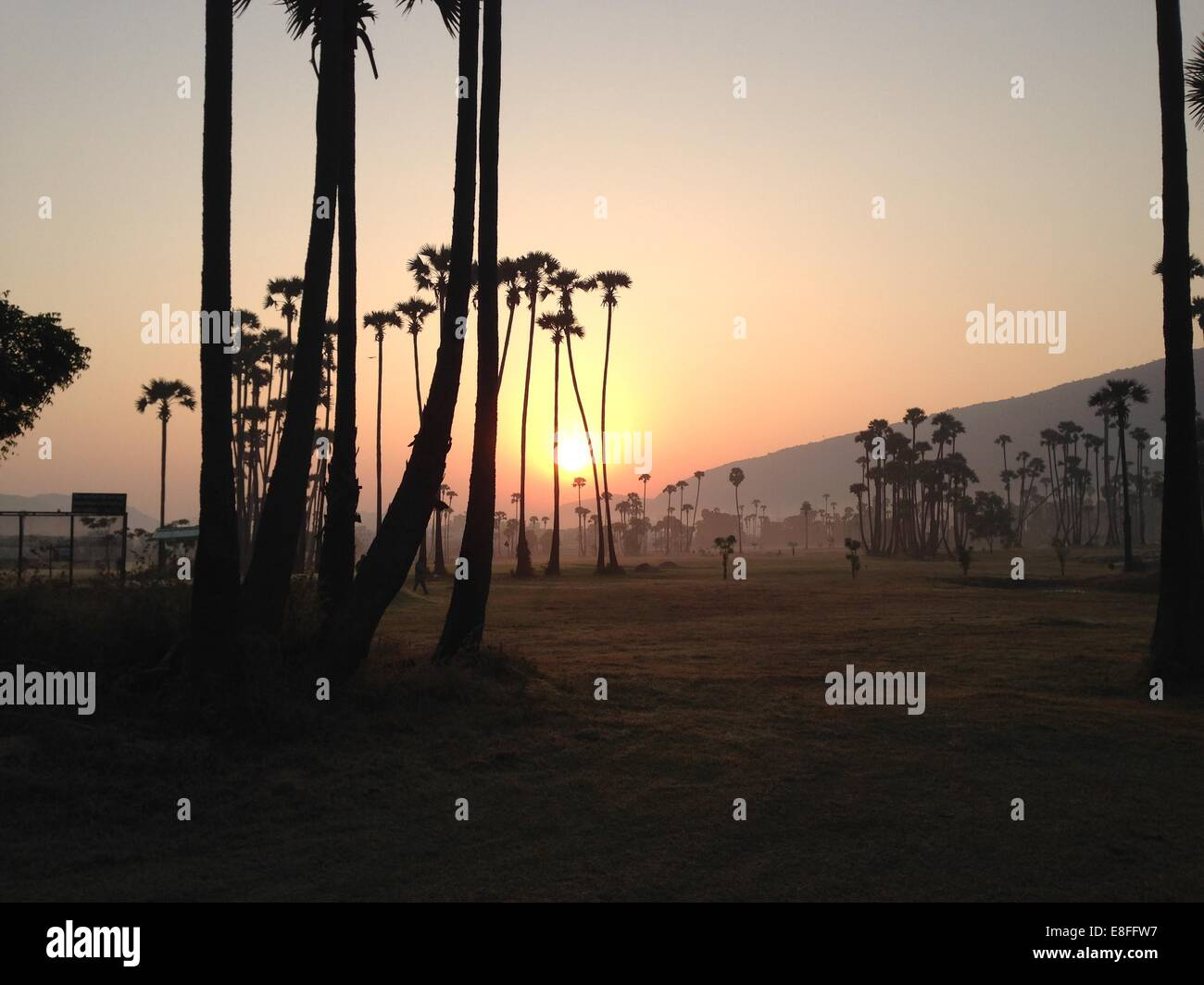 India, Andhra Pradesh, Vishakhapatnam, Vishakapatnam Bypass, Sunrise over palm trees - Stock Image