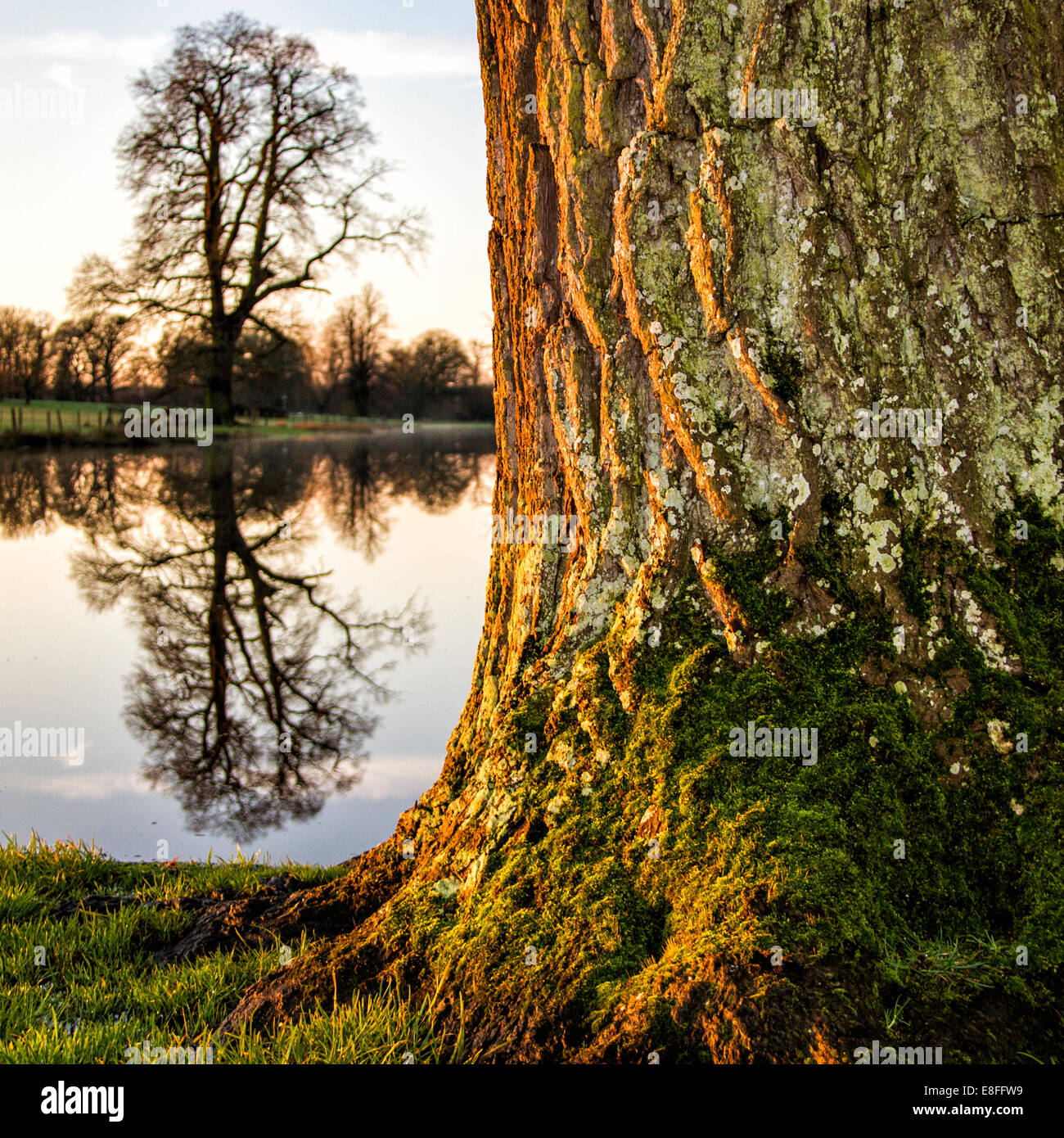 Tree by river - Stock Image