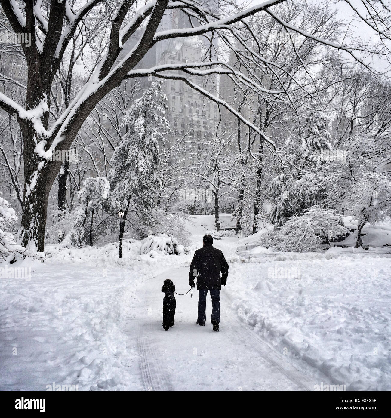 USA, New York, New York City, Man and his dog walking in Central Park in winter - Stock Image
