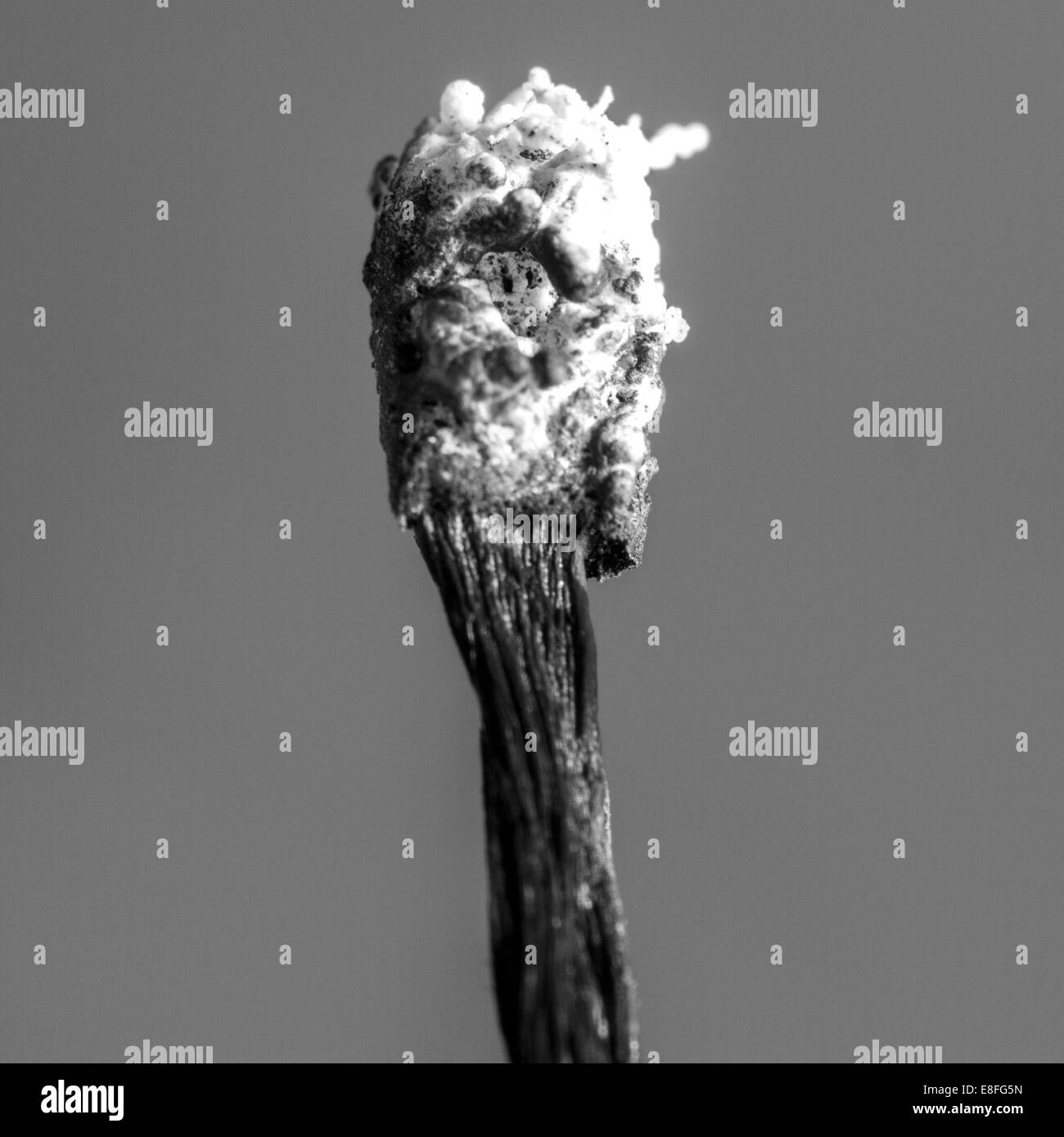 Close-up of a burnt match - Stock Image