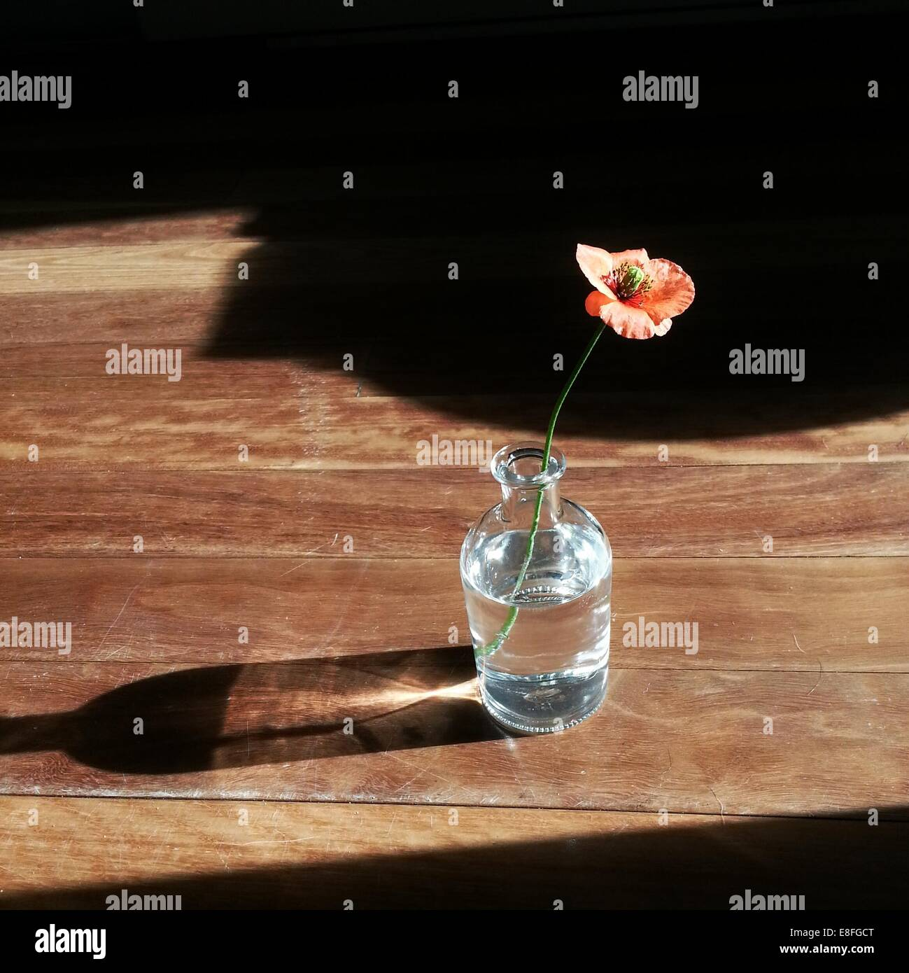 Poppy flower in a vase on wooden table - Stock Image