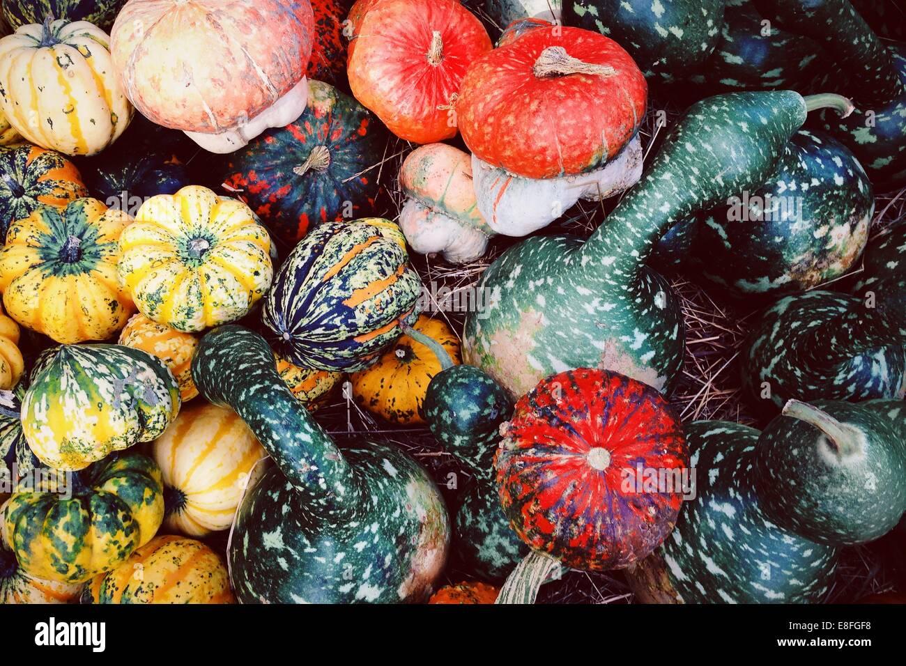Close-up of pumpkins - Stock Image