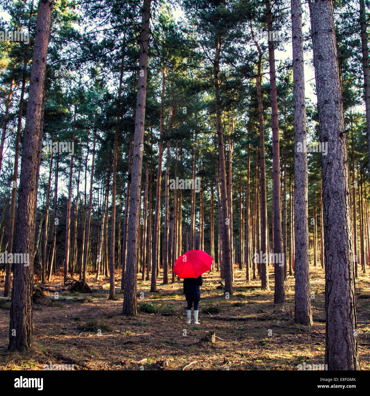 Woman standing in forest with umbrella - Stock Image