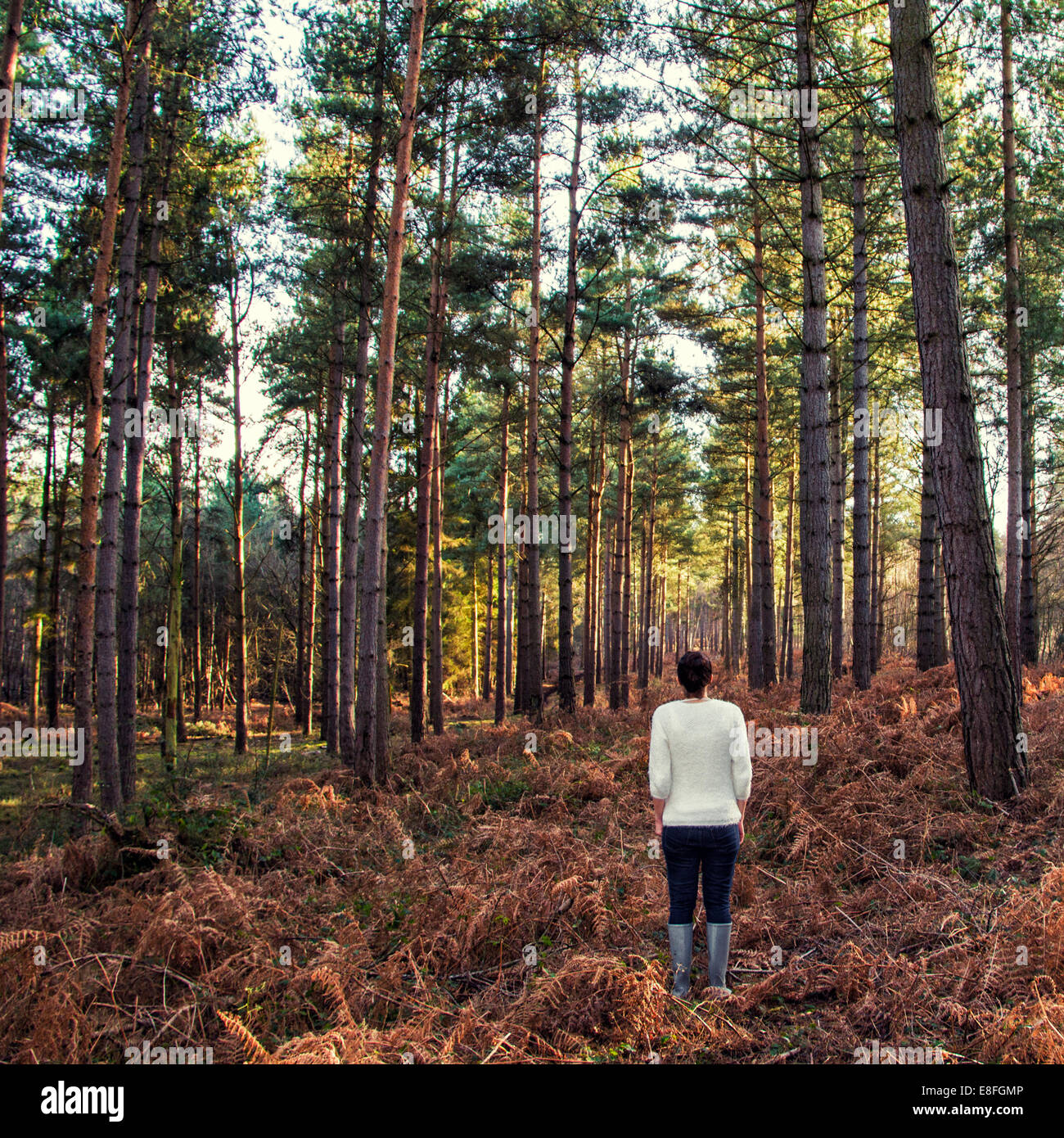 Rear view of woman standing in forest - Stock Image