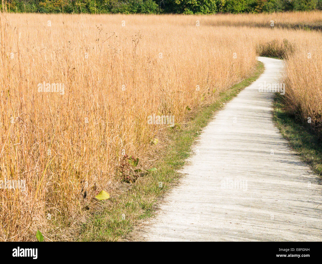 Nature trail through grass Stock Photo
