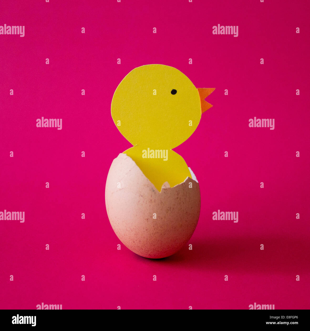 Chick hatching from egg - Stock Image