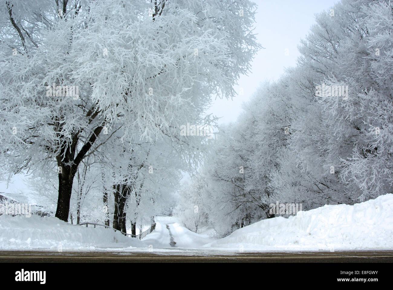 Empty tree lined road in snow, Minnesota, America, USA - Stock Image