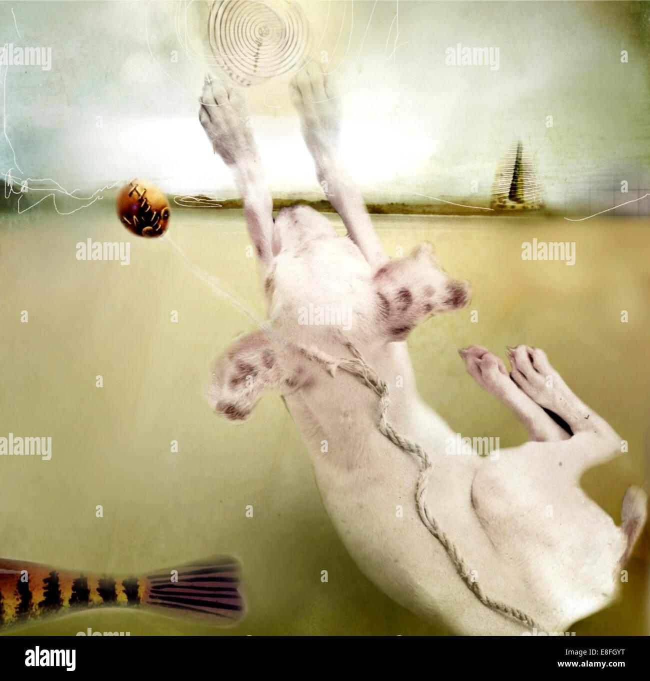 Conceptual dog - Stock Image
