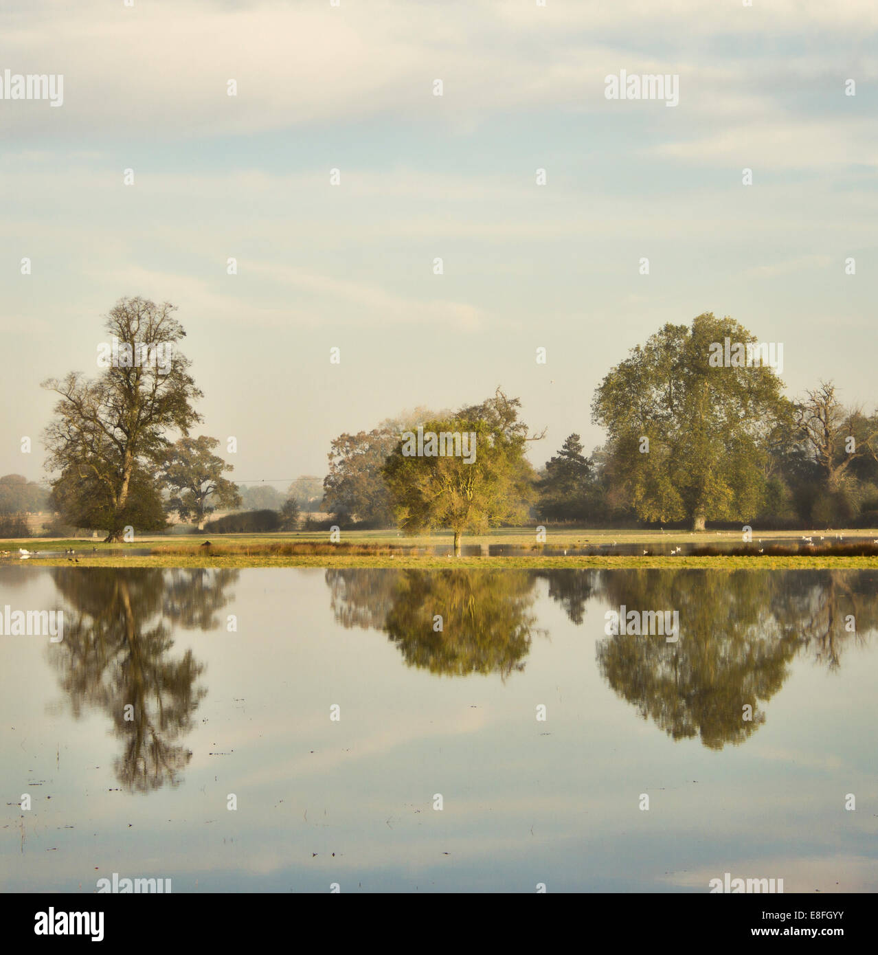 Country landscape reflected in water - Stock Image
