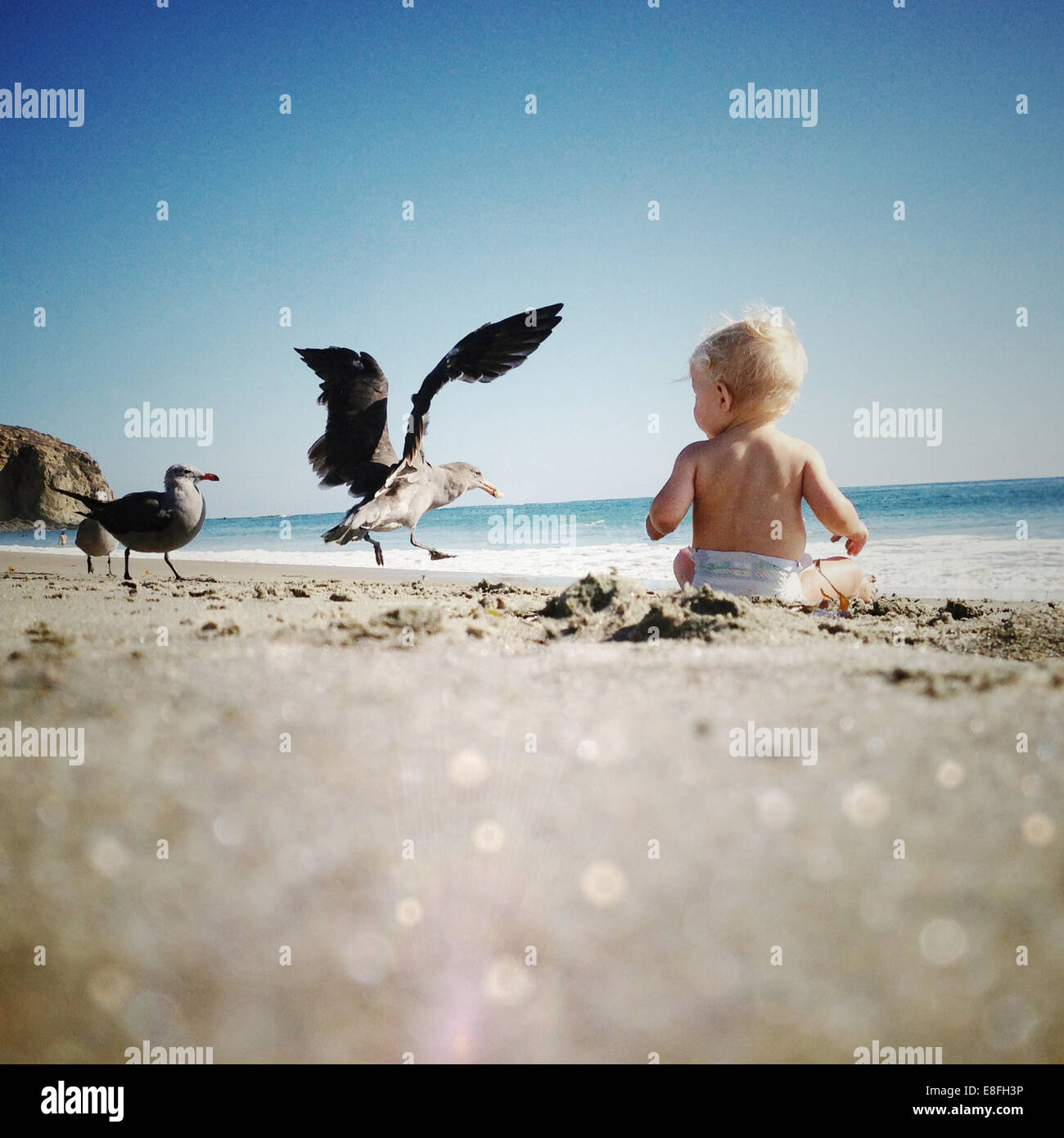 Baby boy sitting on the beach with seagulls, Dana Point, California, America, USA - Stock Image