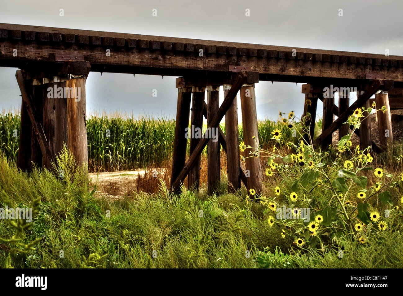 Rural train trestle surrounded by corn and wild flowers - Stock Image
