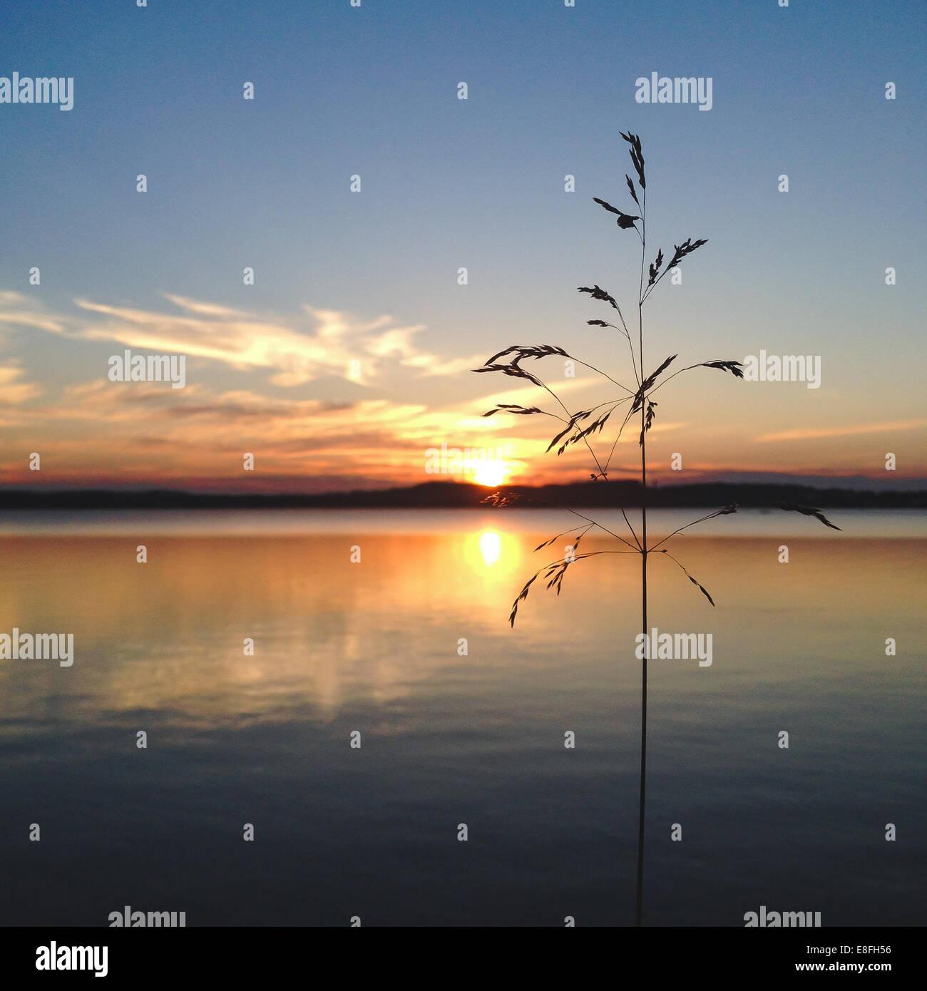 Wild grass at sunset - Stock Image