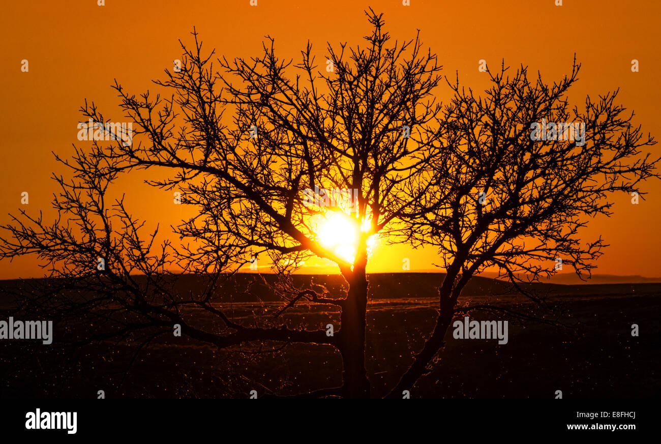 Tree At Sunset - Stock Image