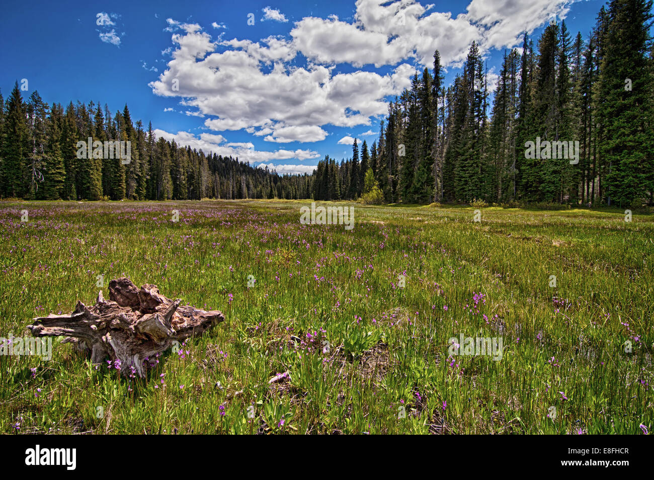 USA, Idaho, Boise, Boise National Forest, Long Creek Road, Field in Mountains - Stock Image