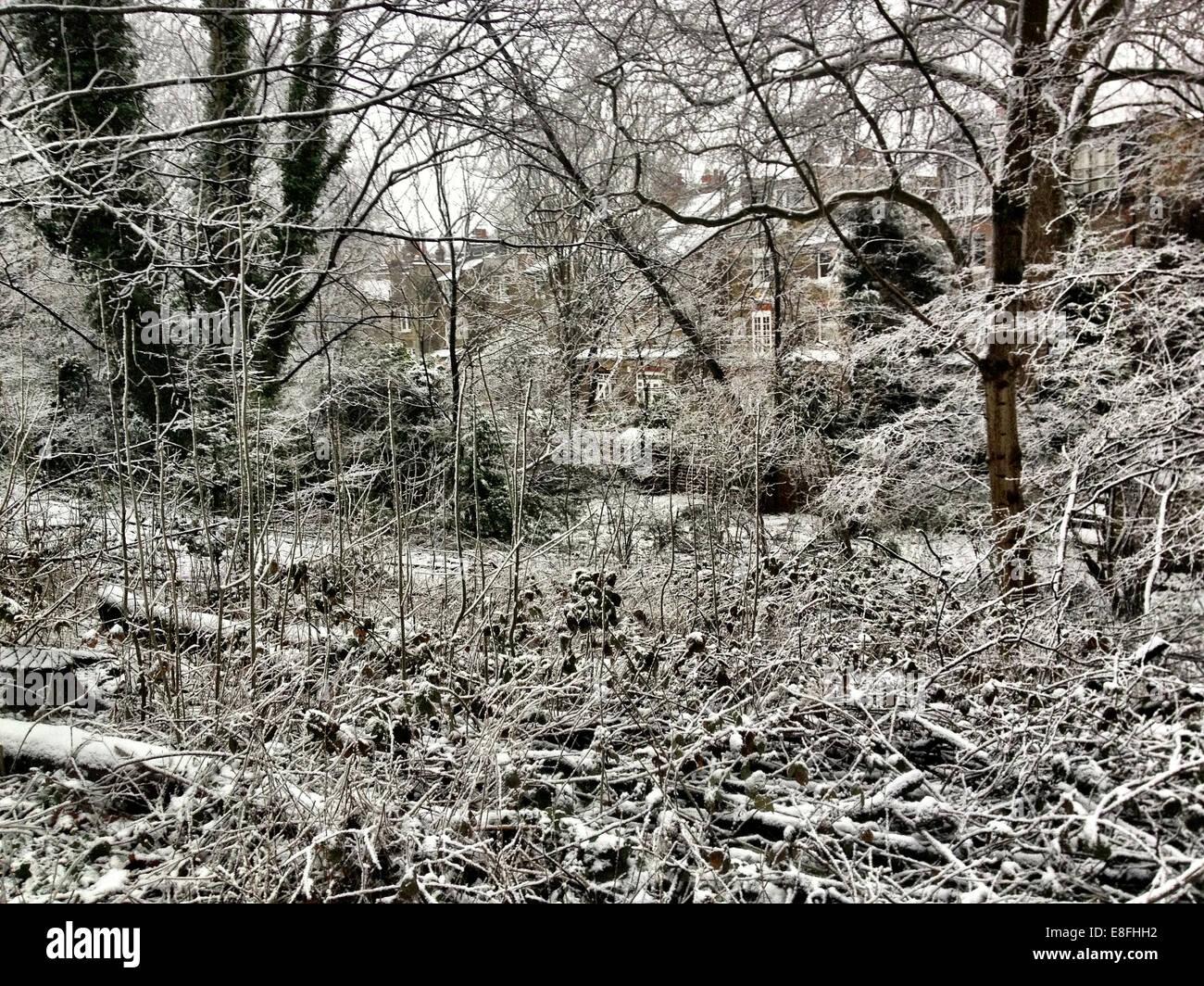UK, London, London Borough of Haringey, Highgate Village, Urban winter scene with houses - Stock Image
