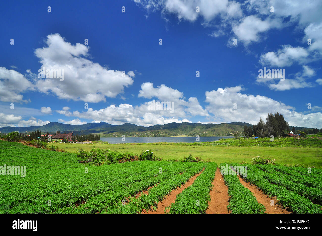 Indonesia, West Sumatra, Solok, Alahan Panjang, Clouds over field - Stock Image