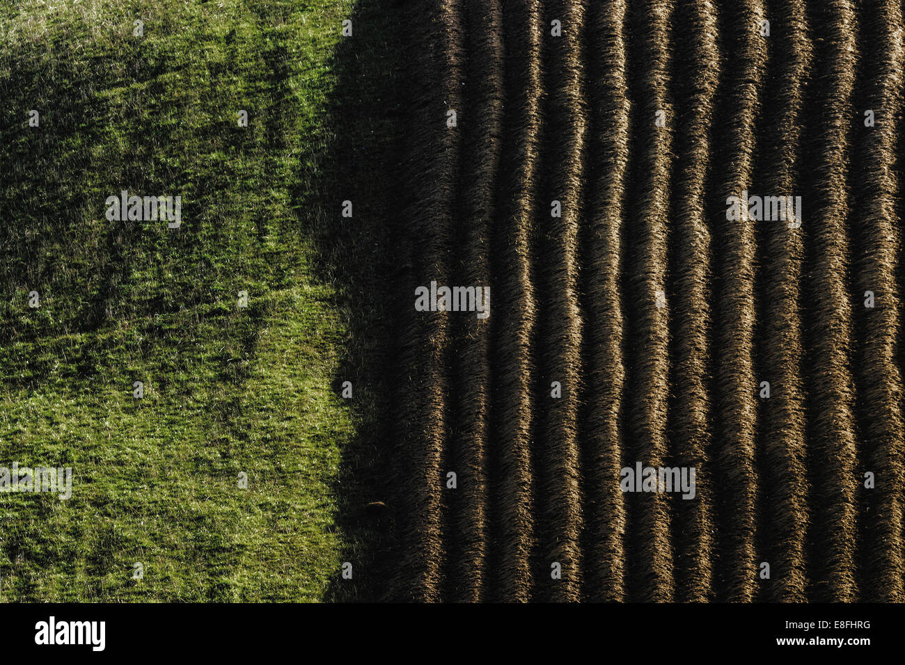 Extreme close up of green material - Stock Image
