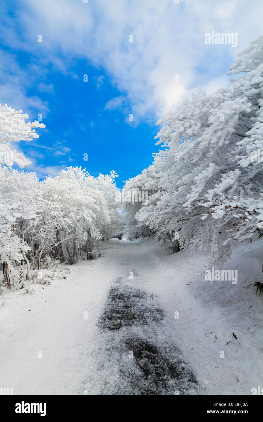 Japan, Chubu Region, Shimo-Ina, Aichi Prefecture, Mt Yuno after snow storm Stock Photo