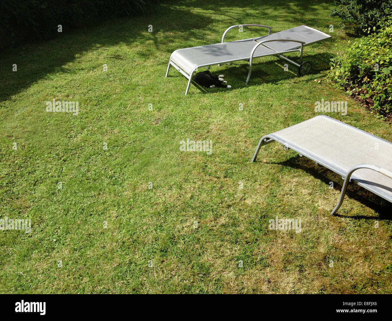 Two empty loungers and sleeping cat in a garden - Stock Image