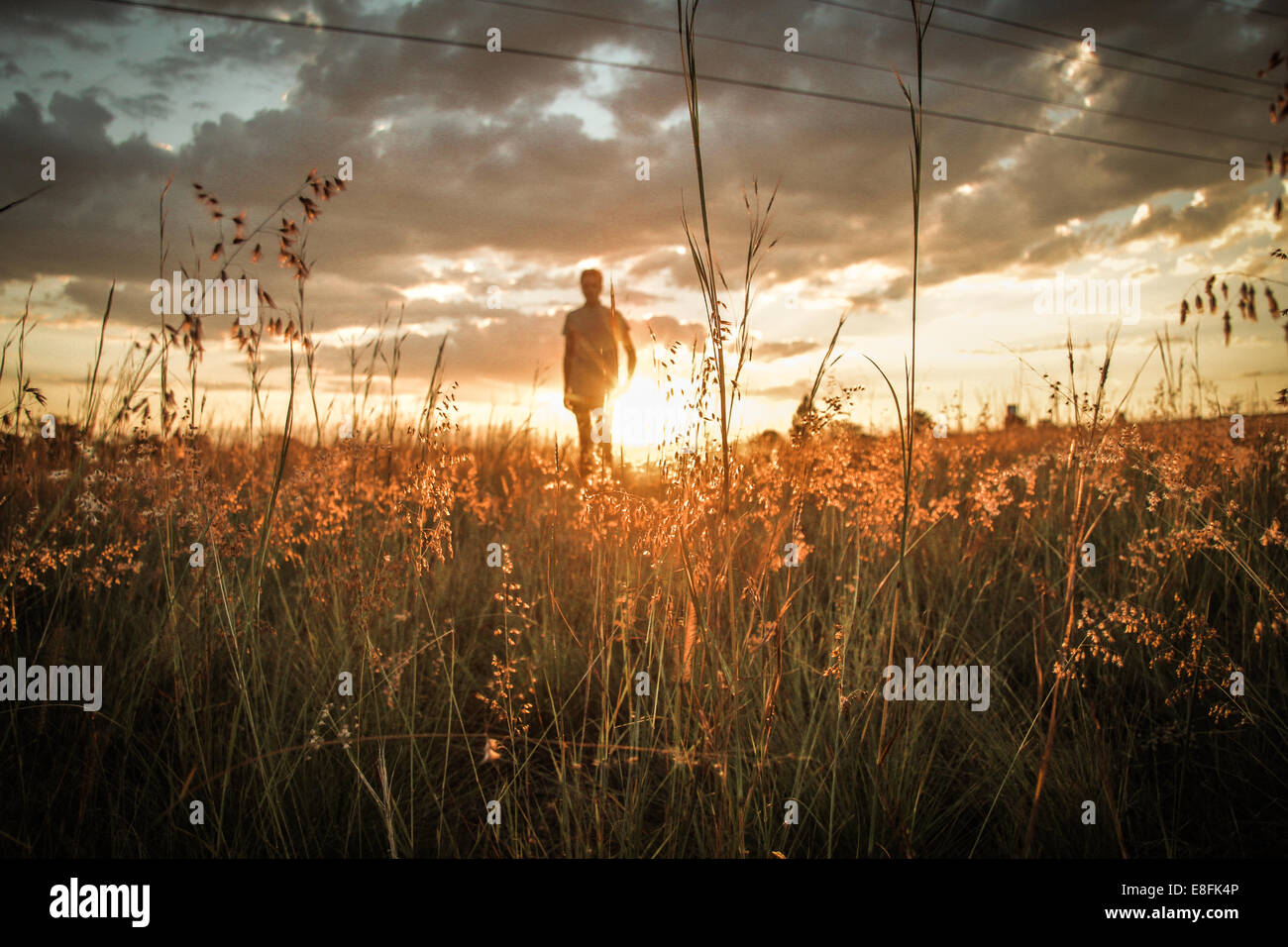 Man In Field As Sunset - Stock Image