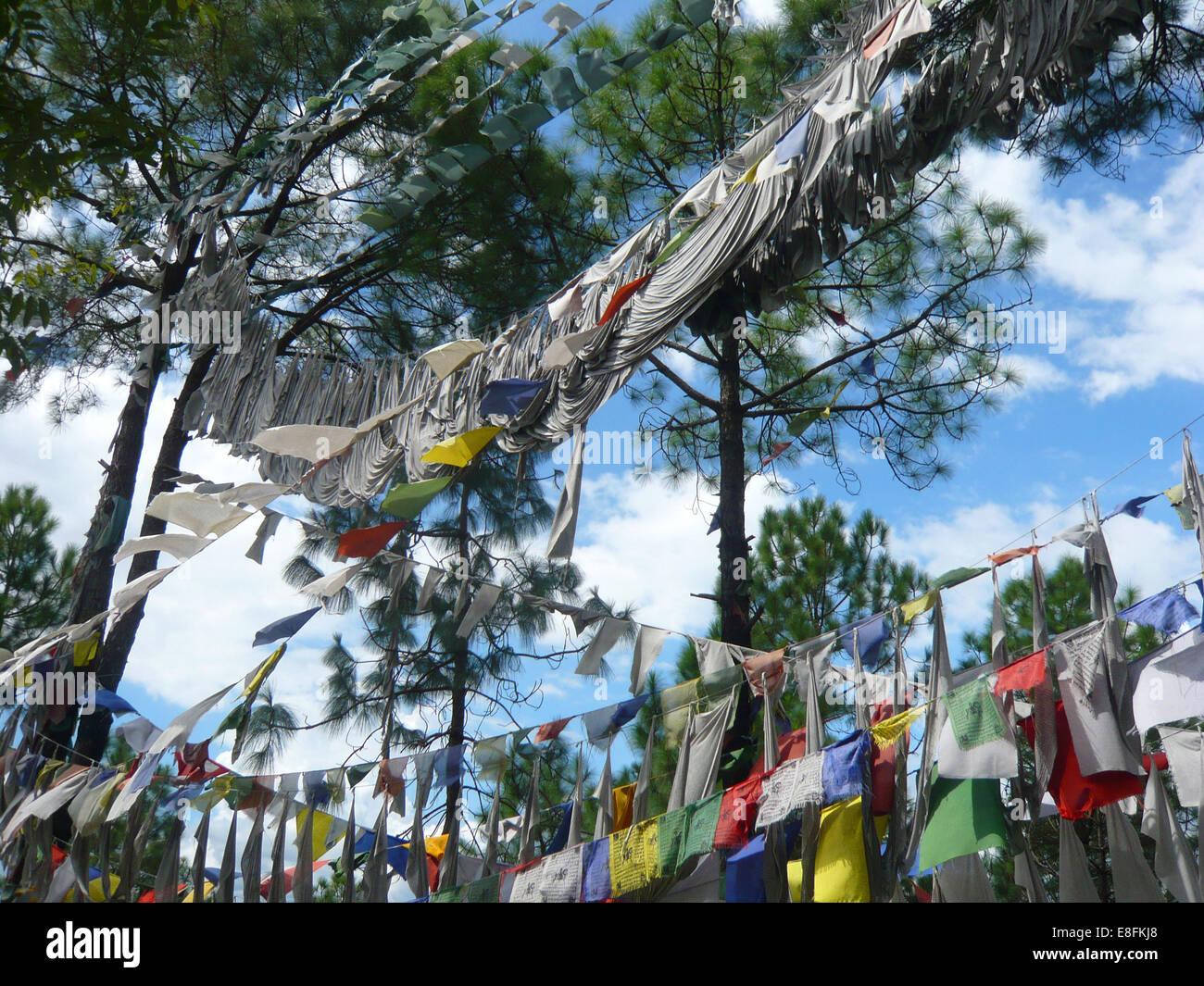 Tibetan Prayer Flags hanging in trees, Himachal Pradesh, India - Stock Image